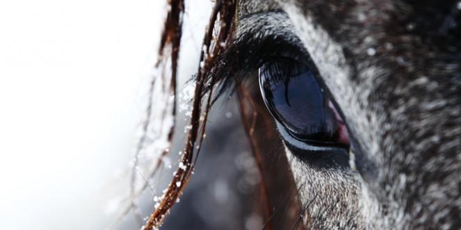 horse-face-winter-2000x1000
